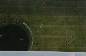 第2のリスクヘッジ水槽