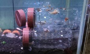 メダカ水槽の稚ザリ隔離容器