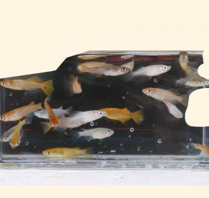 「2018年の繁殖シーズン序盤戦の親魚のミックス水槽」のメダカ達