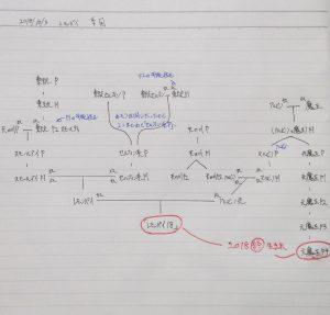 レモンパイメダカの系図