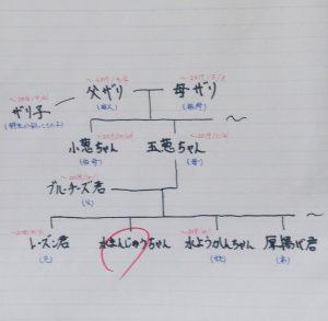 ザリガニ一家の家系図