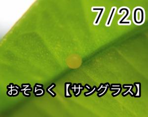 アゲハチョウ001