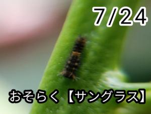 アゲハチョウ002