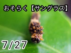 アゲハチョウ003