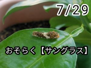 アゲハチョウ005