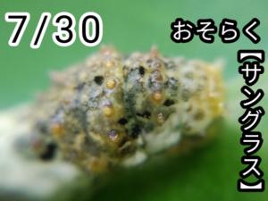 アゲハチョウ006