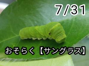 アゲハチョウ008