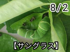 アゲハチョウ013