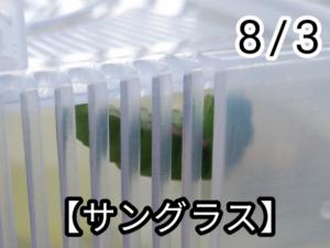 アゲハチョウ014