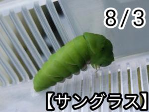 アゲハチョウ016
