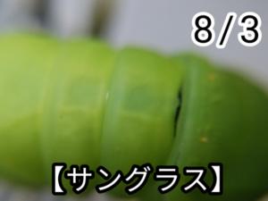 アゲハチョウ017