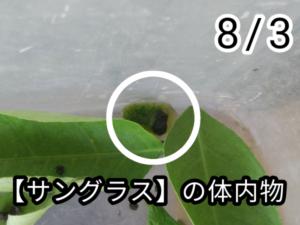 アゲハチョウ018
