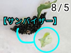 アゲハチョウ021