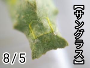 アゲハチョウ022