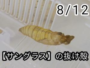 アゲハチョウ029