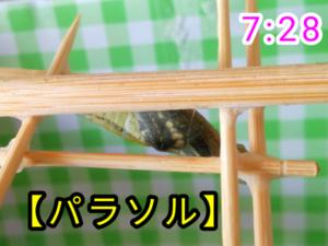 アゲハチョウ037