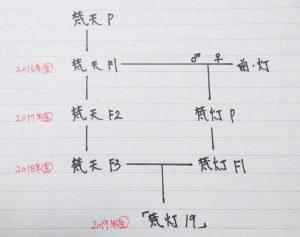 「梵灯19」の系図
