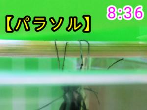 アゲハチョウ045