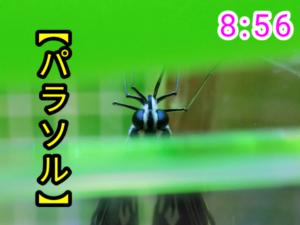 アゲハチョウ055