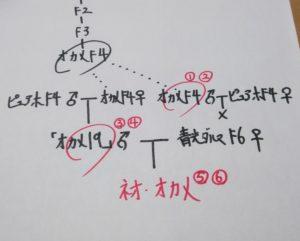 オカメ系統の家系図
