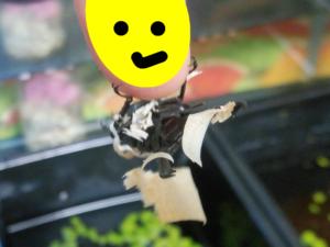 黒酢くん ①