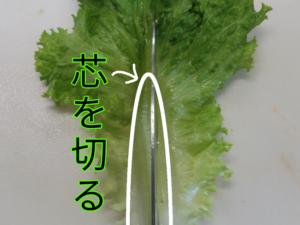 葉物野菜 ②
