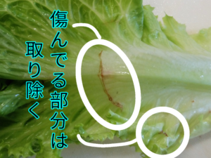 葉物野菜 ③