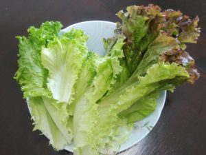 葉物野菜 ①