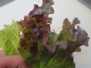 葉物野菜 ④
