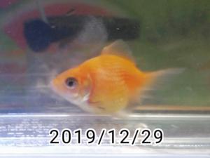 雑穀ちゃん(3)