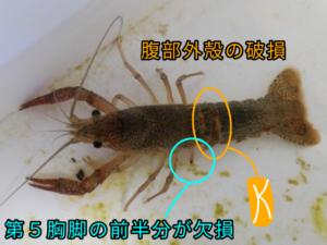 水まちゃん(1/21撮影)