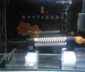 雑穀ちゃん(5)