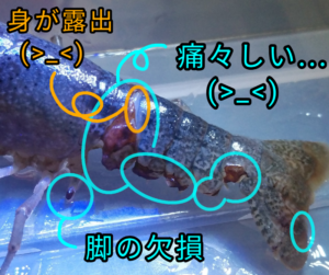 水まちゃん ②