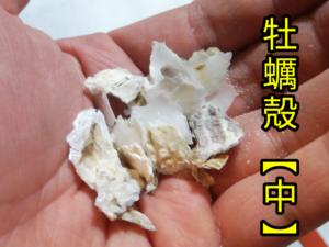 牡蠣殻 ②
