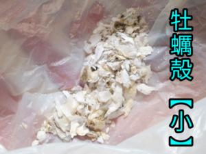 牡蠣殻 ③