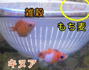 もち麦ちゃん&雑穀ちゃん&キヌアちゃん