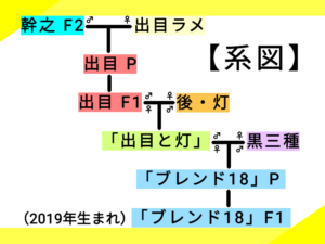 7つ目の系図