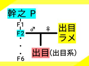 1つ目の系図