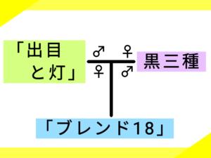 5つ目の系図