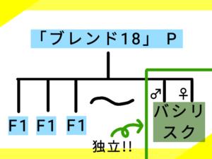 8つ目の系図