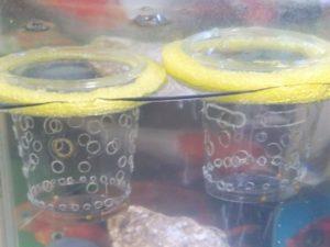 浮かべているプラカップ ①