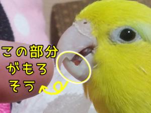 レモンちゃん ②