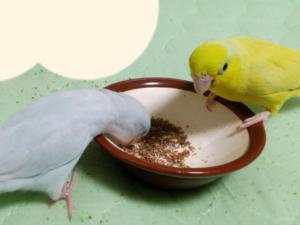あめちゃん&レモンちゃん