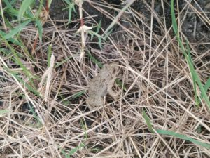 備中高松城の蛙 ⑤