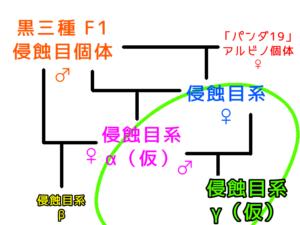 侵蝕目系の未来系図 ②