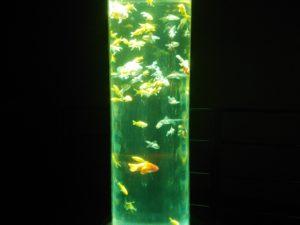 金魚の杜 ④