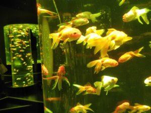 金魚の杜 ⑤