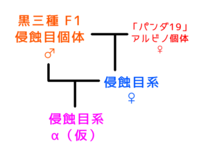 侵蝕目系の系図 ②
