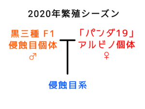 侵蝕目系の系図 ①