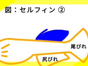 光体型メダカのセルフィン ②